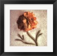 Framed Sand Ranunculus