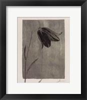 Silver Stem I Framed Print