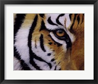 Framed Eye of the Tiger