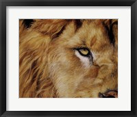 Framed Eye of the Lion