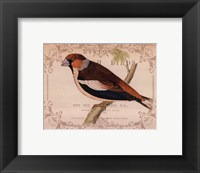 British Birds I Framed Print