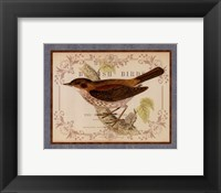 British Birds II Framed Print