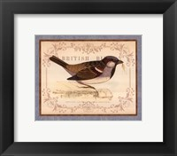 British Birds III Framed Print