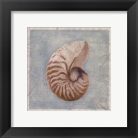 Framed Shells I Framed Print