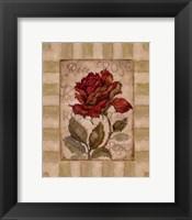 Belle Fleur I Framed Print