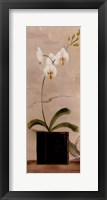 Asian Orchid II Framed Print