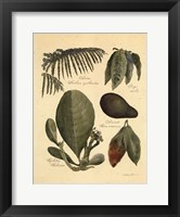 Rainforest Collection I Framed Print