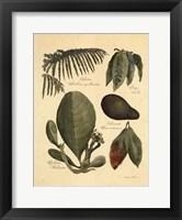 Rainforest Collection I Framed Print