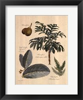 Rainforest Collection II Framed Print