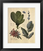 Rainforest Collection III Framed Print