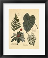 Rainforest Collection IV Framed Print