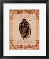 Shell Botanical II Framed Print