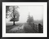 Misty I Framed Print