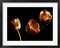 Framed Tulip Trio