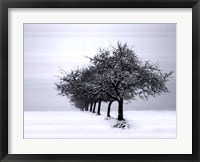 Framed Winter Tree Line I