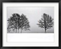 Framed Winter Tree Line II