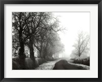 Framed Misty Tree-Lined Road