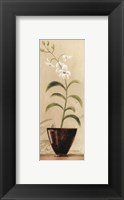 Asian Orchid I Framed Print