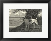 Framed Staghound