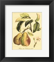 Petite Tuscan Fruits IV Framed Print