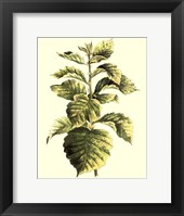 Tropical Variegation III Framed Print