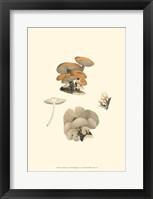 Framed Curtis Mushrooms I
