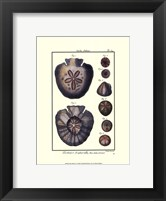 Framed Sea Shells V