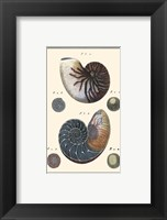 Framed Sea Shells VI