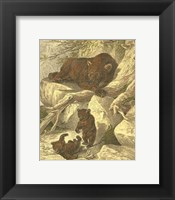 Framed Small Brown Bear