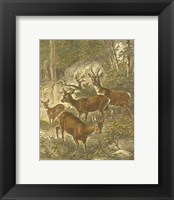 Framed Small Roe Deer