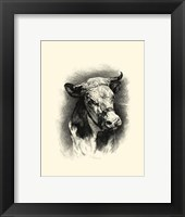 Framed Antique Cattle I