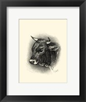 Framed Antique Cattle IV