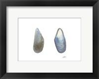 Framed Tidal Treasure III