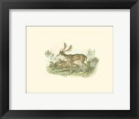 Framed Petite Fallow Deer