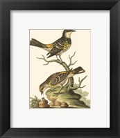 Framed Petite Bird Study III
