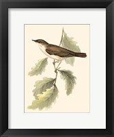 Framed Gould's Nightingale