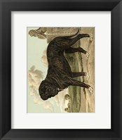 Framed Mastiff