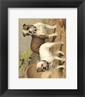 Framed Bull Dogs