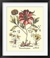 Framed Framboise Floral I