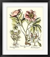 Framed Framboise Floral II