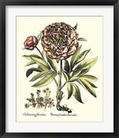 Framed Framboise Floral III