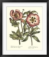 Framed Framboise Floral IV