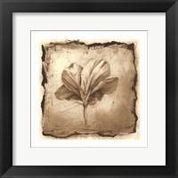 Floral Impression IX Framed Print