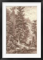 Framed Sepia Noble Fir