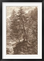 Framed Sepia Larch Tree