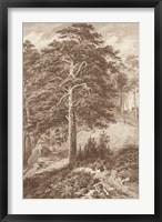 Framed Sepia Wild Pine
