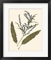 Framed Pressed Botanical IV