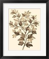 Framed Sepia Munting Foliage I