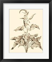 Framed Sepia Munting Foliage II