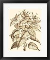 Framed Sepia Munting Foliage III